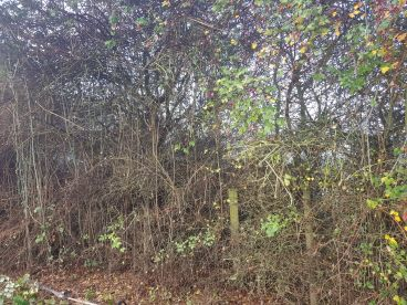 Darren Trees And Garden Service