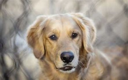Buddy's Dog Training