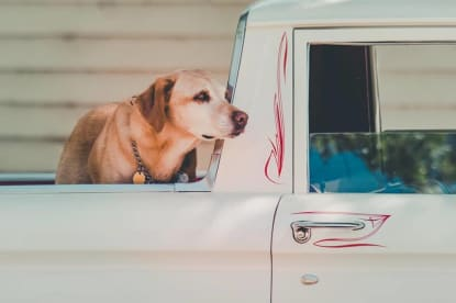 Euro Pet Travel