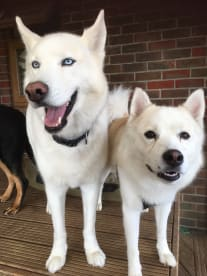 Buddy's Pack - Best Dog Date