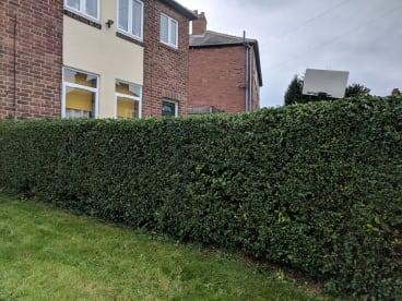 Greenman Tree Care & Garden Maintenance