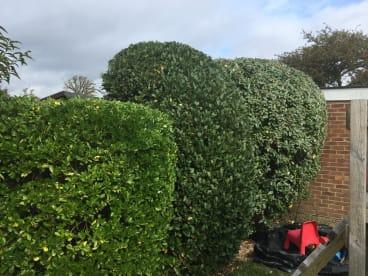 Green Man Tree Care