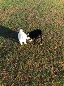 Jen's Dog Walking & Pet Sitting Services