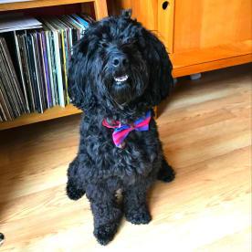 Bruce Whitelaw - Dog Trainer