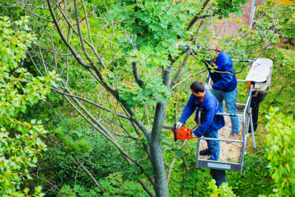 Peters Tree Services