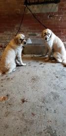 Crazy Dog Lady Pet Services