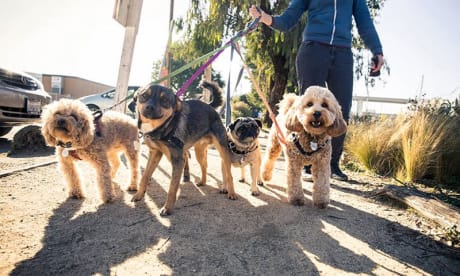 Happy Tails Walking Services