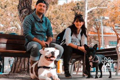 Amity Dogs Bcn - Adiestramiento y Educación Canina