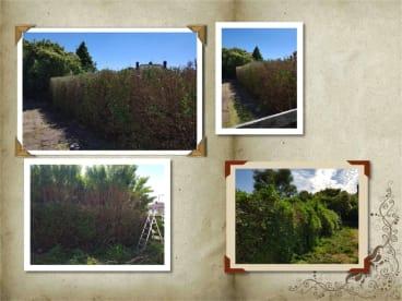 S & G Garden Maintenance & CCTV