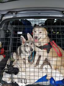 Saffi's Pet Services