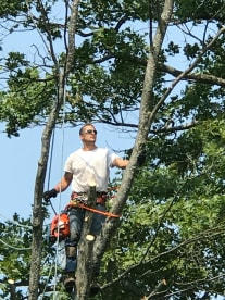 Advance Tree Service Llc