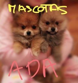 Mascotas Ada tienda online