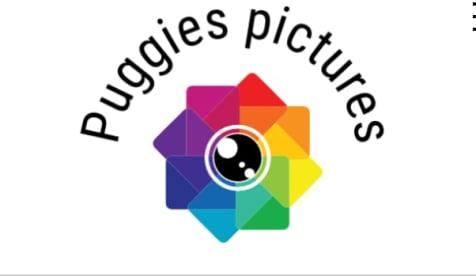 Puggies Pictures