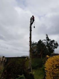ATK Arboriculture LTD