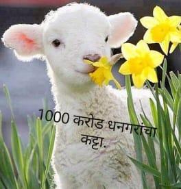 1000 Karod Dhangarancha Katta