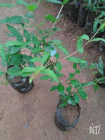 Aadishakti Nursery & Seeds
