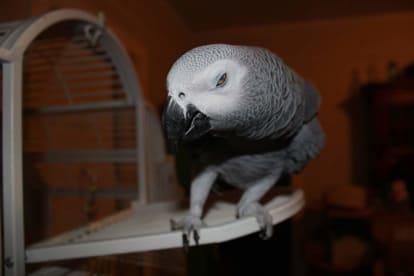 Meandas Parrot Haven