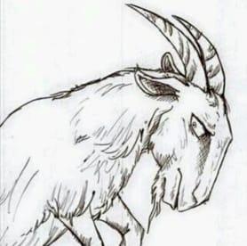 Homininacapra