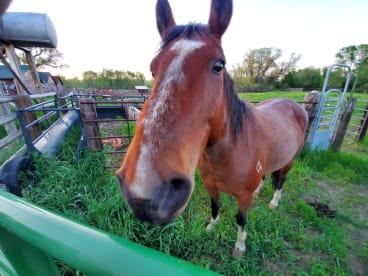 Cody Ellenson Horsemanship