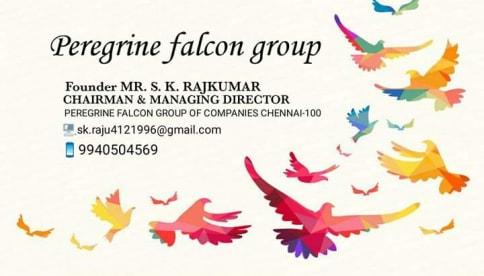 Peregrine Falcon Gorup