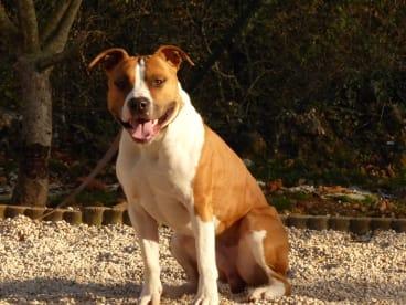 Association Dog Impact Rescue