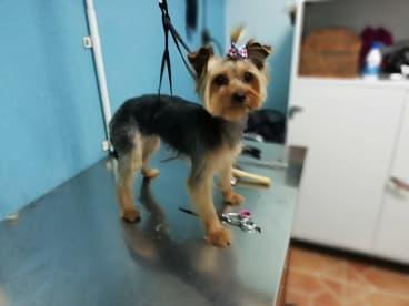 Peluquería Canina Mabel Gaona