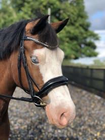 BuckedOff Equestrian