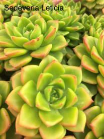 Plantas Luzalma