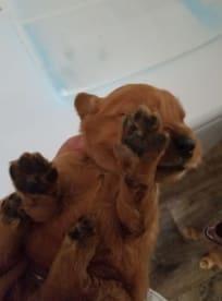 Joy's Pups
