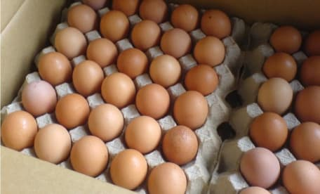 Rob's Eggs