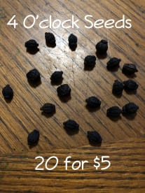 Seeds By Love Your Garden