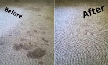 Payne Carpet Cleaning Services
