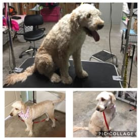 Sittin' Pretty Pet Spa & Boutique