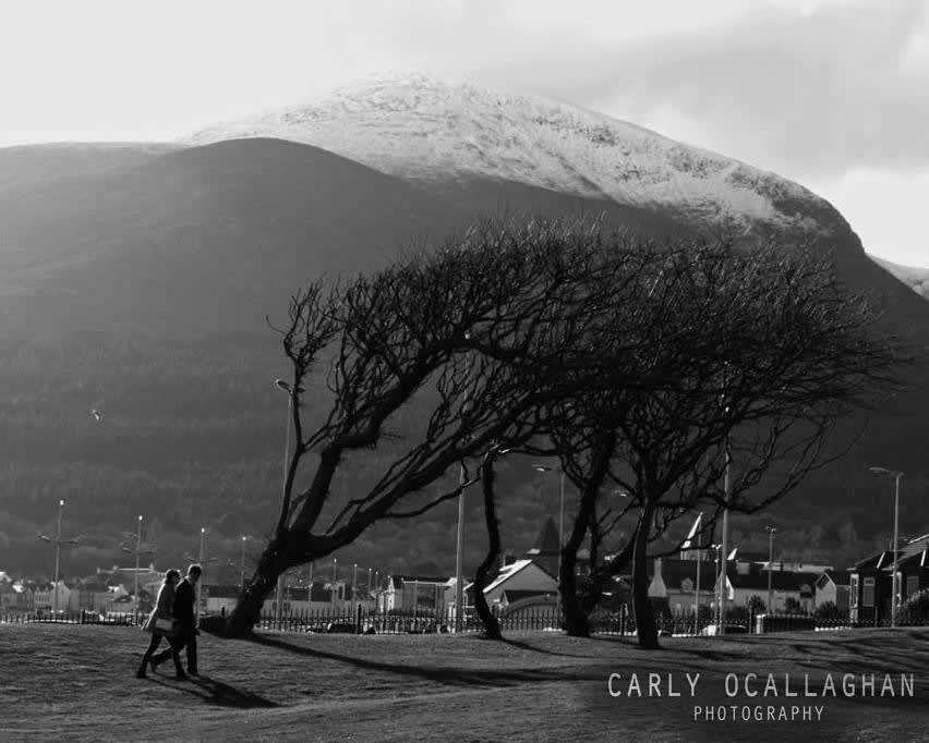 Carly O'Callaghan Photography