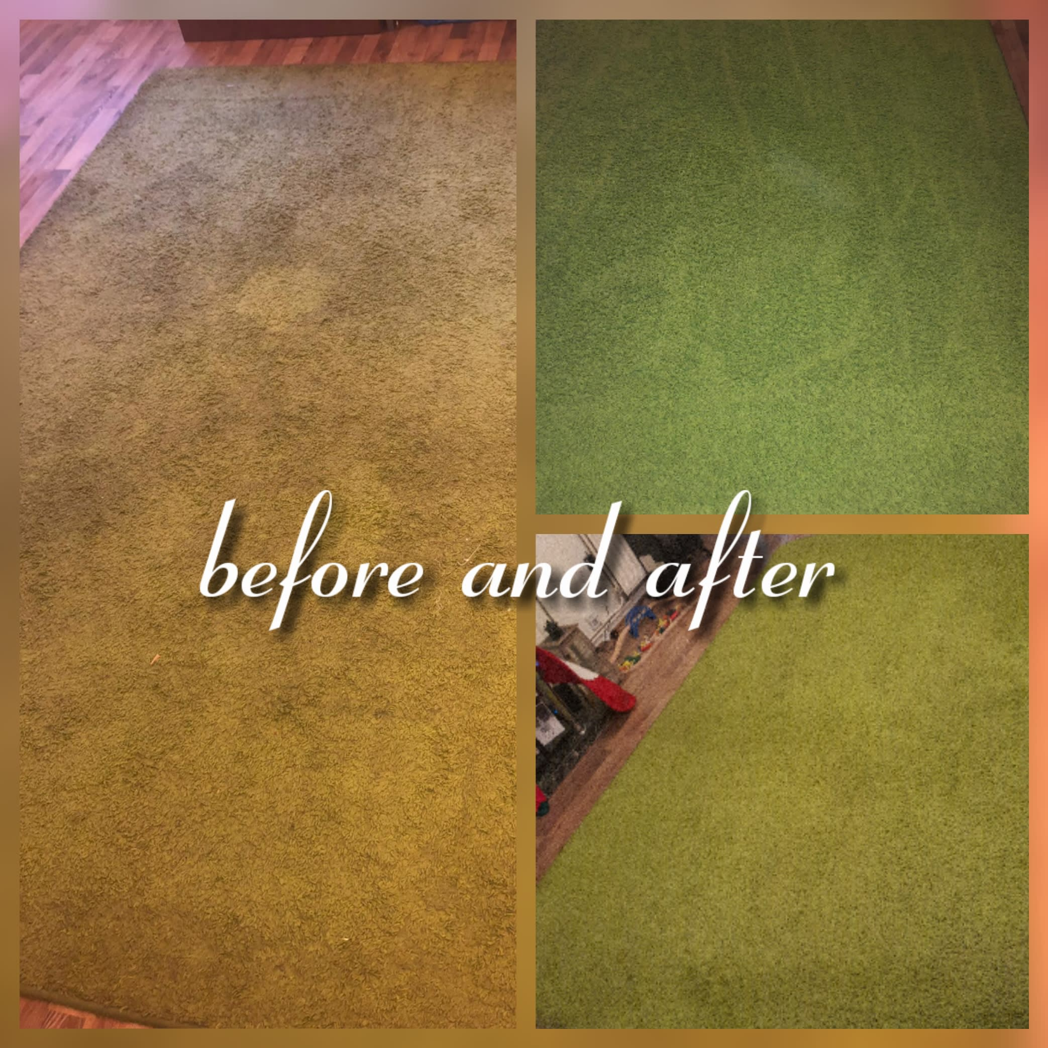 Bebo Carpet & Domestic Cleaning