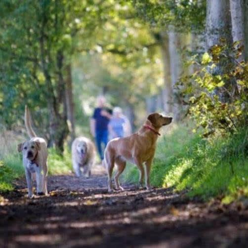Brampton Dog Walking Services