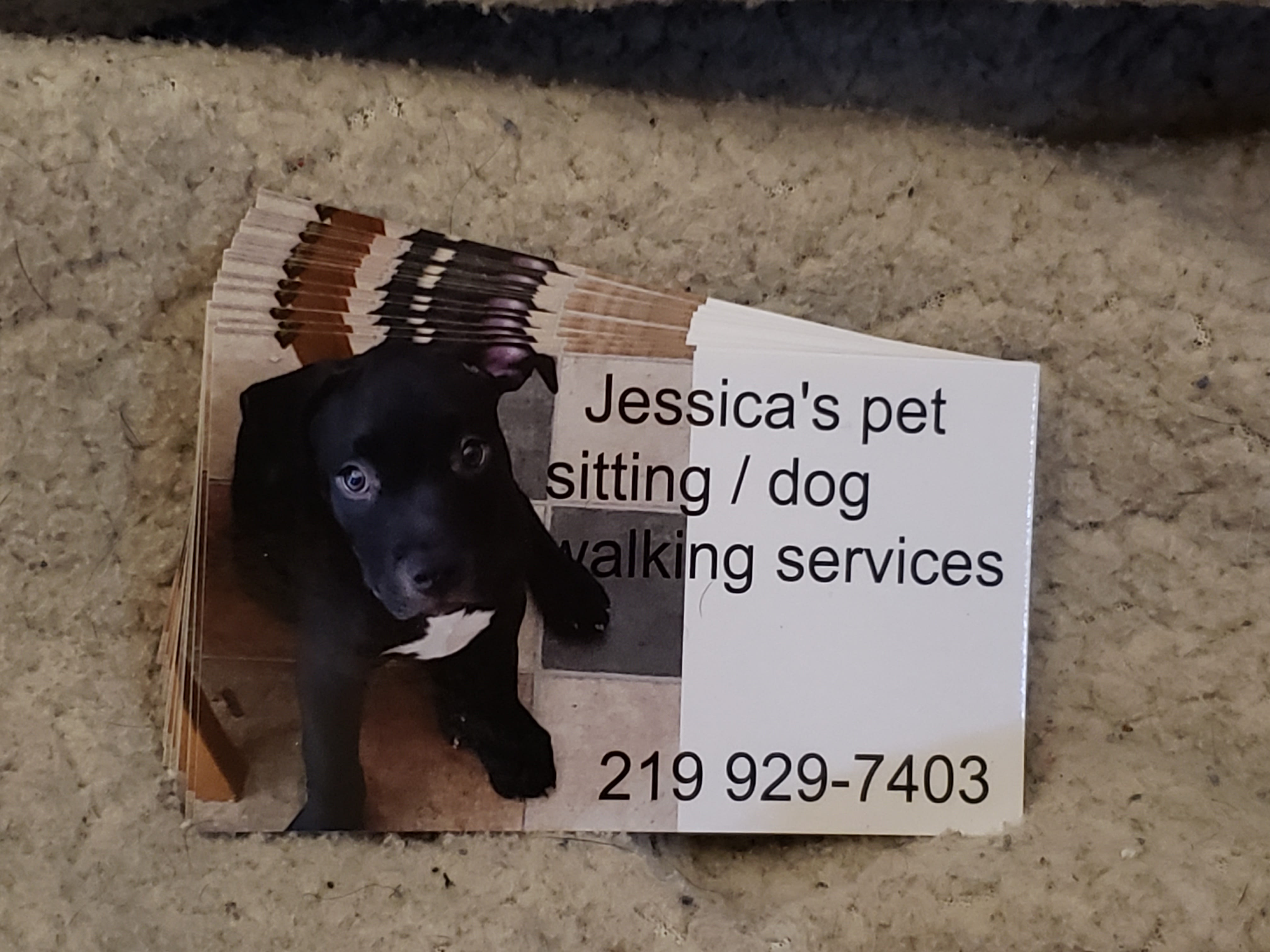 Jessica's Pet Sitting / Walking Services