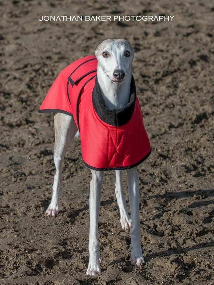 Skinny Wigglewhippet/Greyhound Coats